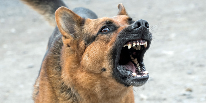 problemhund