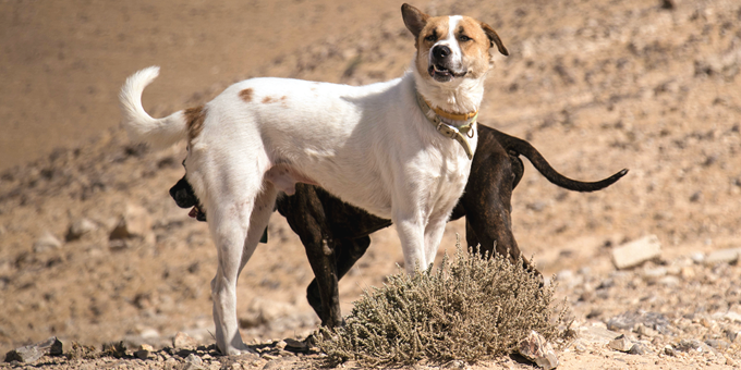 unghundspecial